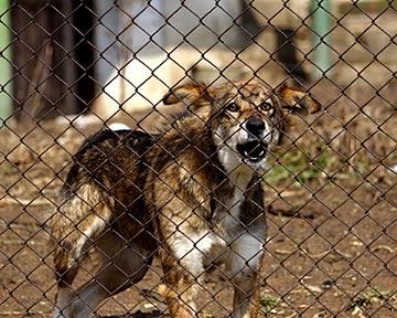 Frisco Dog Bite Lawyers :: Frisco Animal Attack Attorneys
